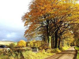 Last of the Autumn leaves on Dartmoor. Click for live BBC news